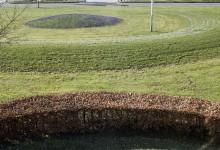 Krokus på græs volde brun bøgehæk i forgrunden
