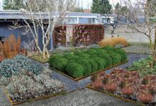 Gårdhave, haveplan, vintergrønne stauder