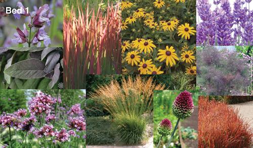 Staudegræsser, blodgræs, lavendel, bronzefennikkel