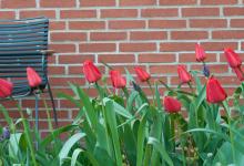 Røde tulipaner plejehjem hovedindgang vestre bænk bord stål kant